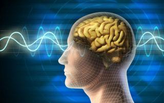 aikido-neuroplasticity